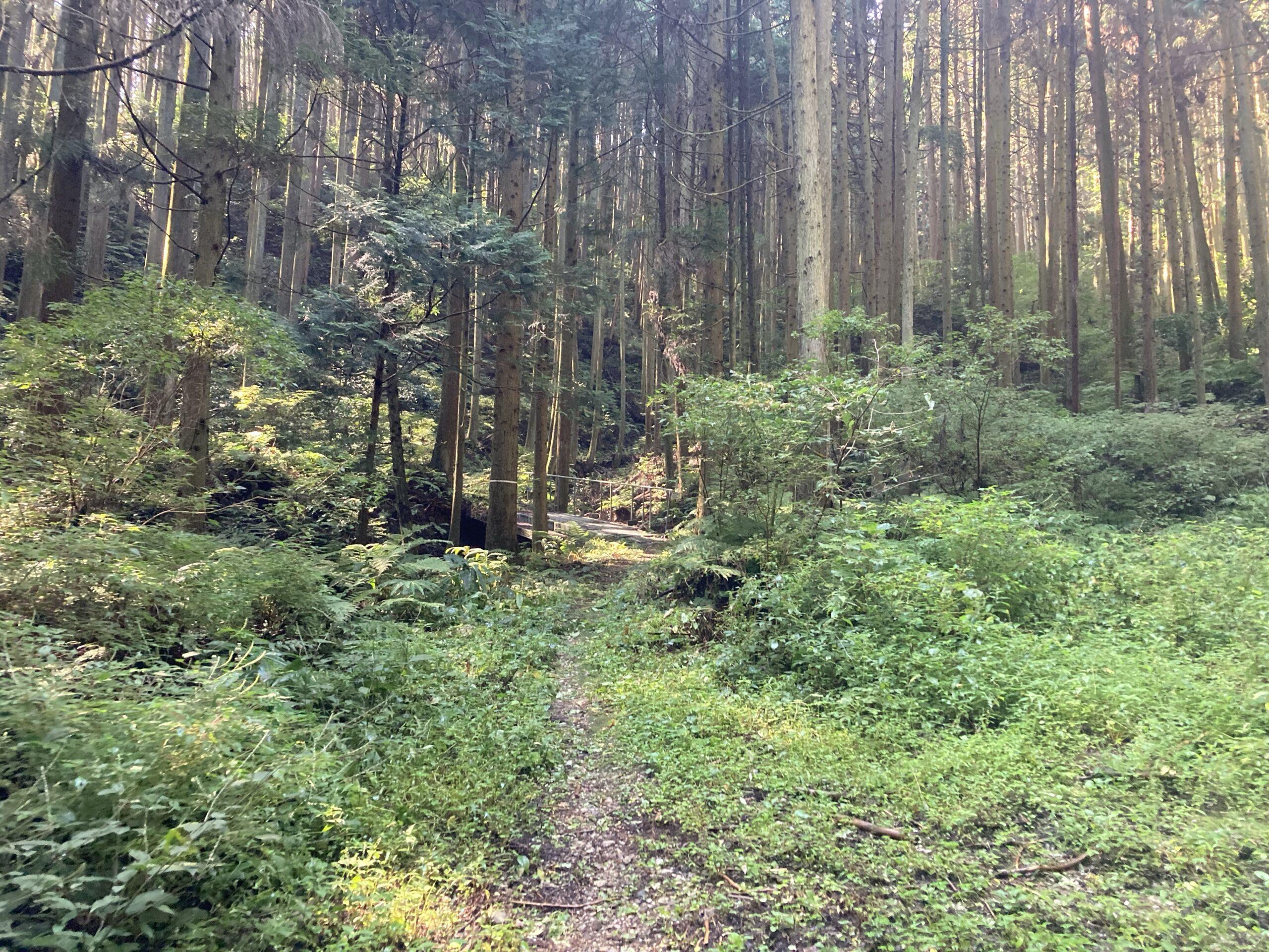 奥河内トレラン大会のためのトレイル整備(砥谷林道から岩湧きの森)